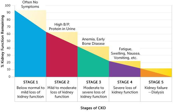 Stages of Kidney Disease - 101 The National Kidney Foundation has divided chronic kidney disease into 5 stages. Each stage is determined based on the percentage of kidney function remaining.