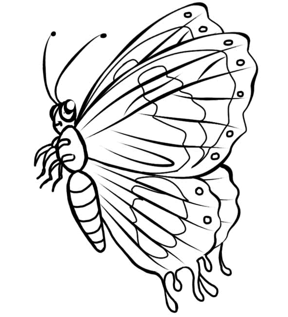 LABEL THE BUTTERFLY Antennae Eye Legs
