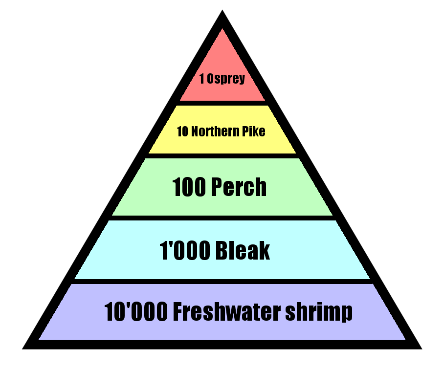 Pyramid of Numbers Shows number relationship between