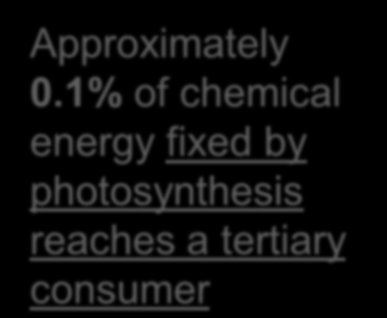 1% of chemical energy fixed by photosynthesis reaches a