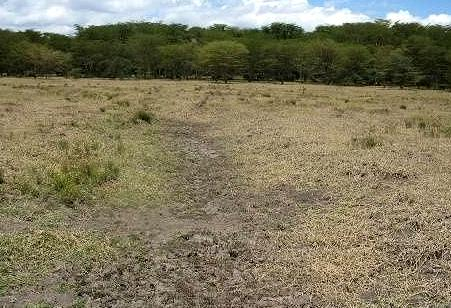 Background before the 1 st Phase of rehabilitation The selected rehabilitation site within Marula Estates showing the old abandoned channels and clumps of dead papyrus plants The selected