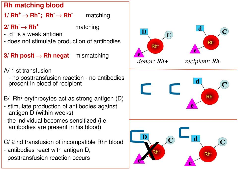 erythrocytes act as strong antigen (D) stimulate production of antibodies against antigen D (within weeks) the individual becomes sensitized (i.