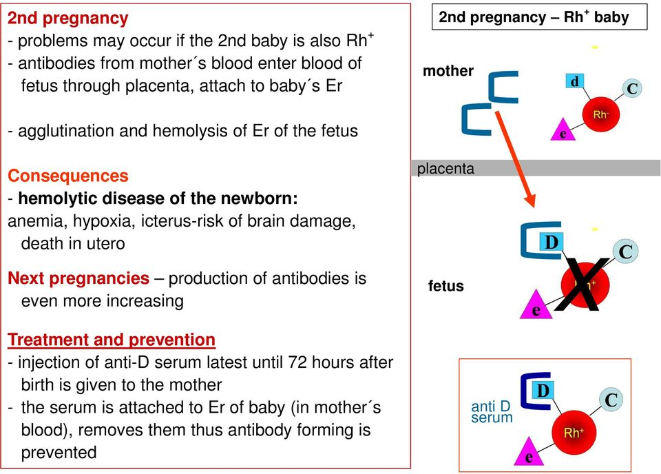 damage, death in utero Next pregnancies production of antibodies is even more increasing Treatment and prevention injection of antid serum latest until 72 hours