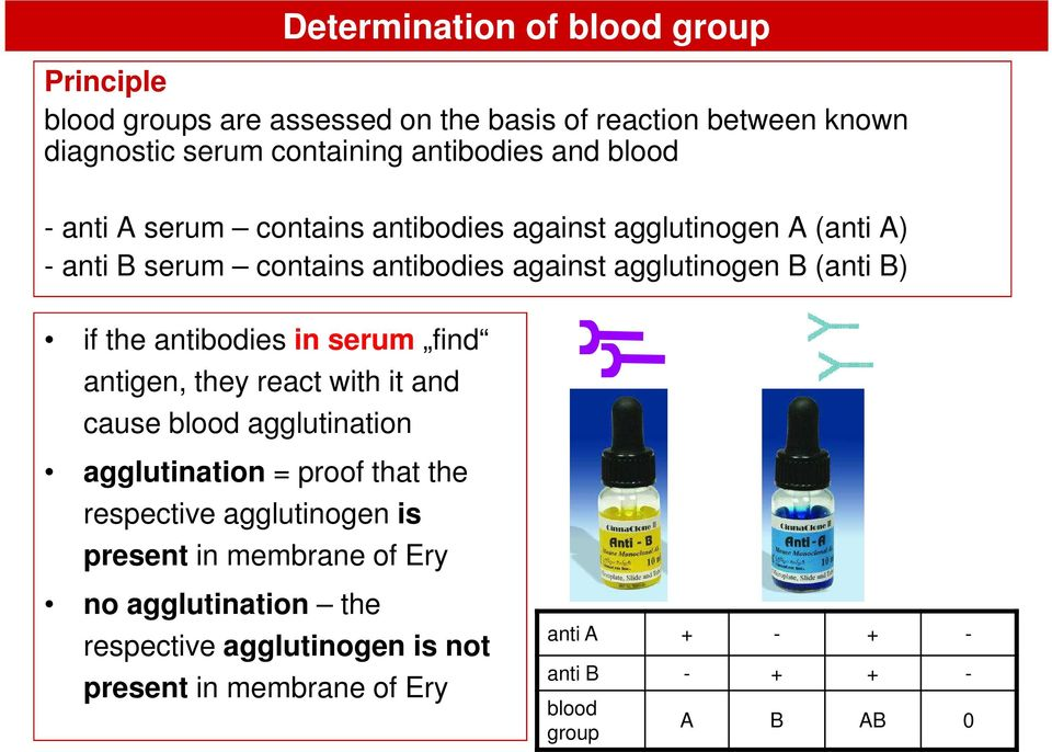the antibodies in serum find antigen, they react with it and cause blood agglutination agglutination = proof that the respective agglutinogen