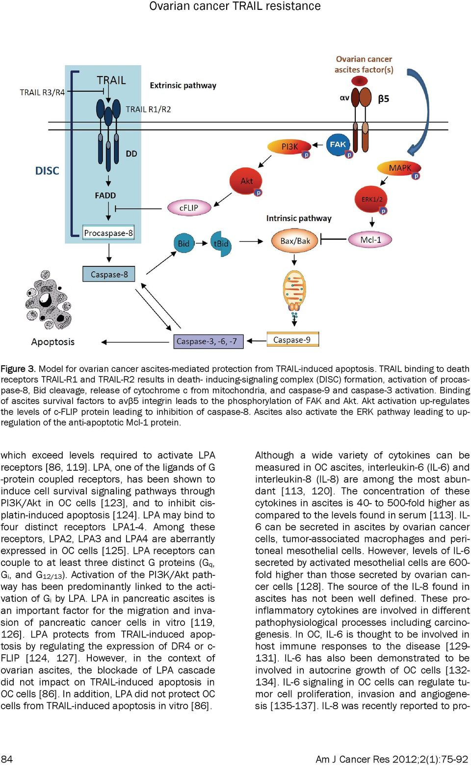 mitochondria, and caspase-9 and caspase-3 activation. Binding of ascites survival factors to avβ5 integrin leads to the phosphorylation of FAK and Akt.