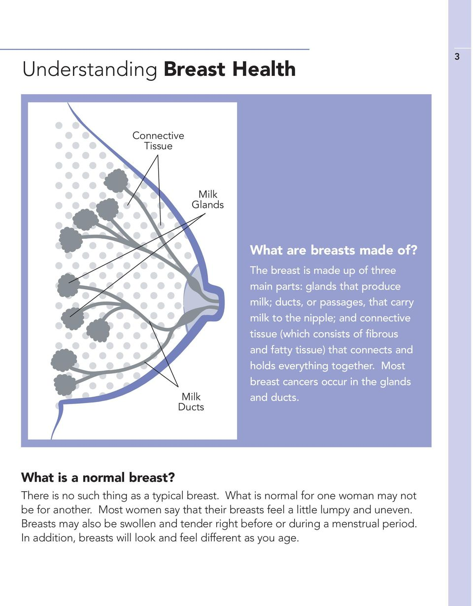 fibrous and fatty tissue) that connects and holds everything together. Most breast cancers occur in the glands and ducts. What is a normal breast?