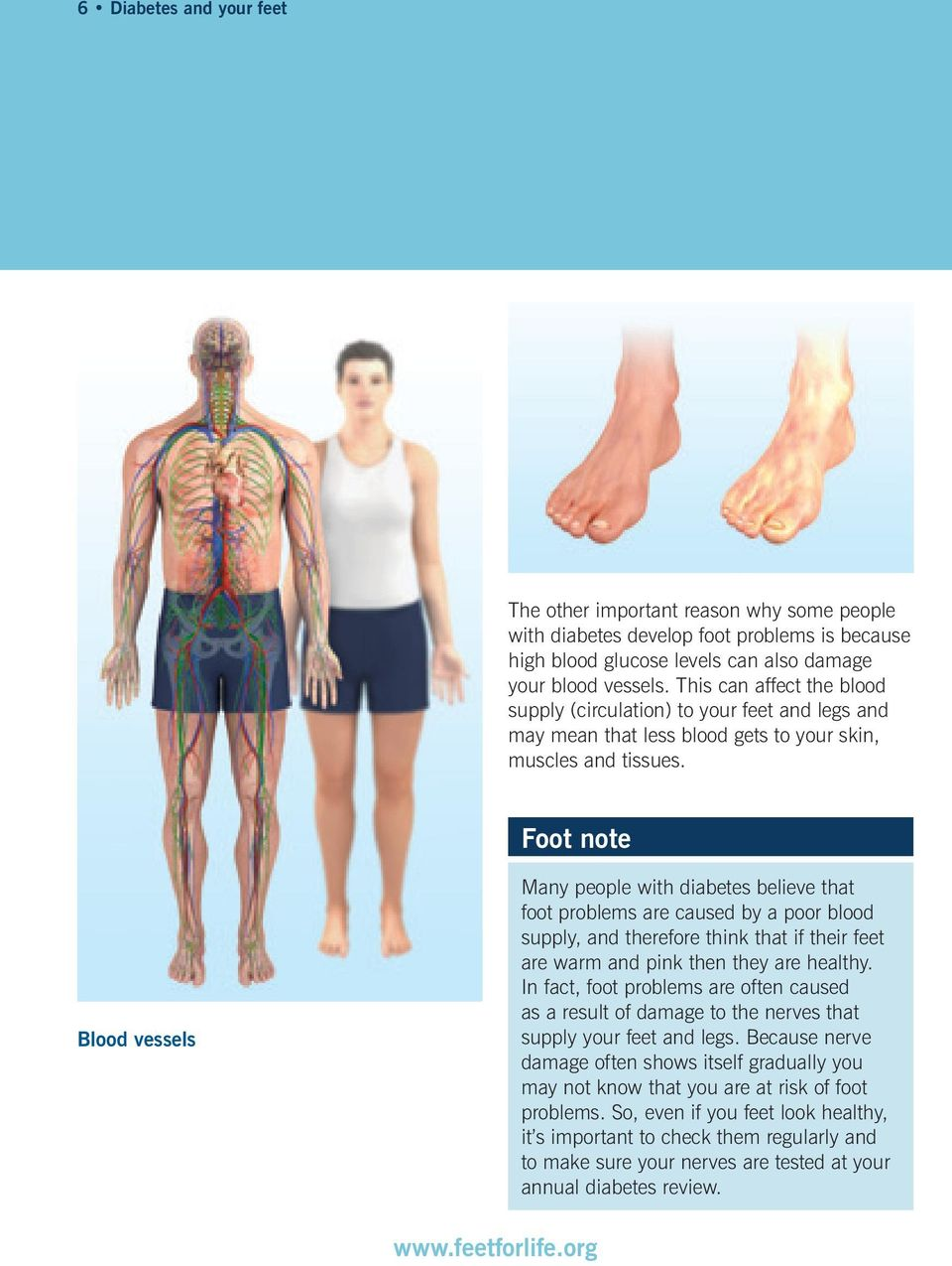 Foot note Blood vessels Many people with diabetes believe that foot problems are caused by a poor blood supply, and therefore think that if their feet are warm and pink then they are healthy.