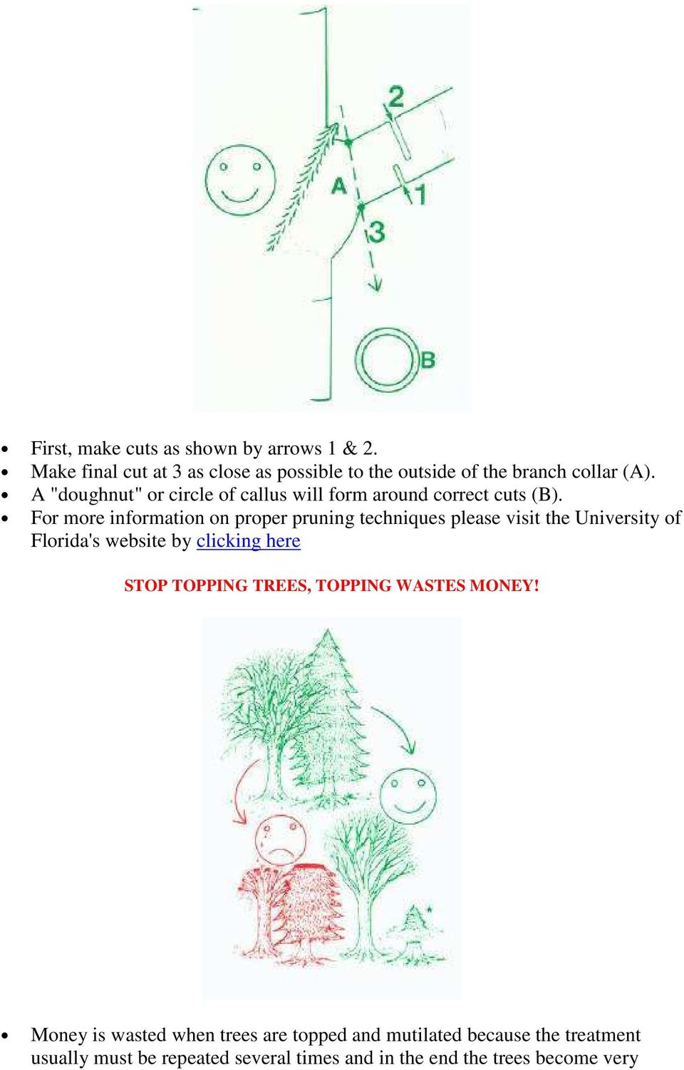 For more information on proper pruning techniques please visit the University of Florida's website by clicking here STOP