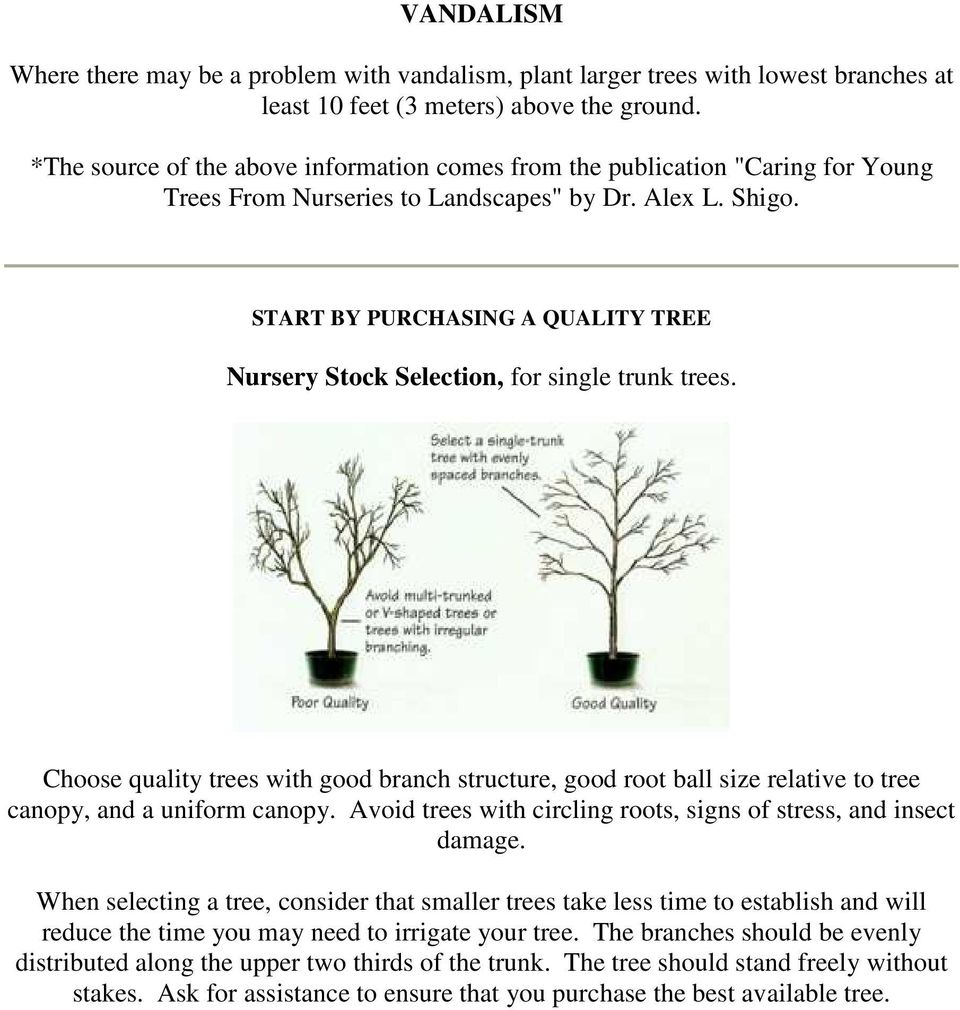 START BY PURCHASING A QUALITY TREE Nursery Stock Selection, for single trunk trees. Choose quality trees with good branch structure, good root ball size relative to tree canopy, and a uniform canopy.