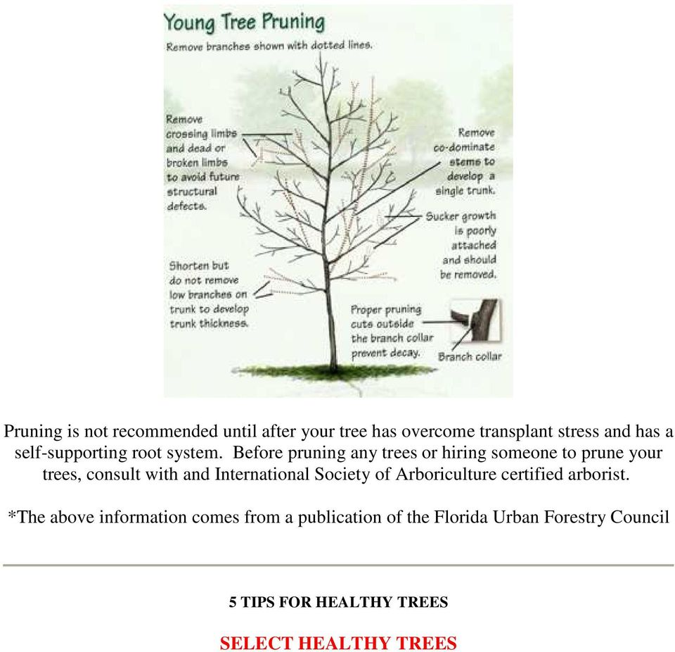 Before pruning any trees or hiring someone to prune your trees, consult with and International