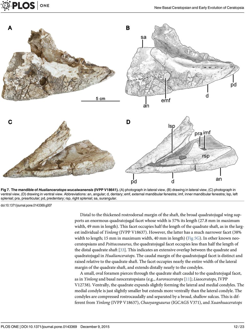doi:10.1371/journal.pone.0143369.g007 Distal to the thickened rostrodorsal margin of the shaft, the broad quadratojugal wing supports an enormous quadratojugal facet whose width is 57% its length (27.