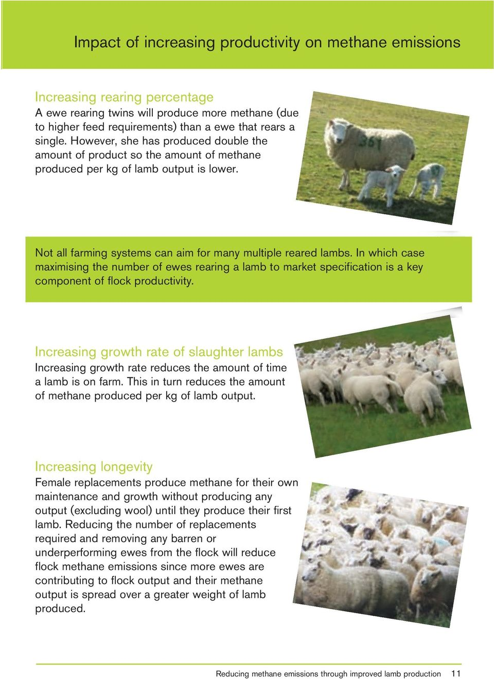 In which case maximising the number of ewes rearing a lamb to market specification is a key component of flock productivity.