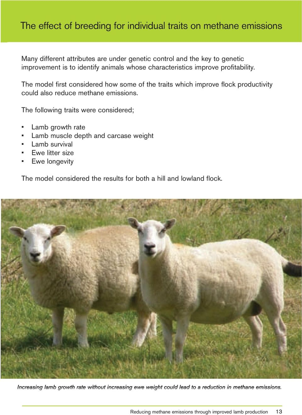 The following traits were considered; Lamb growth rate Lamb muscle depth and carcase weight Lamb survival Ewe litter size Ewe longevity The model considered the results for both
