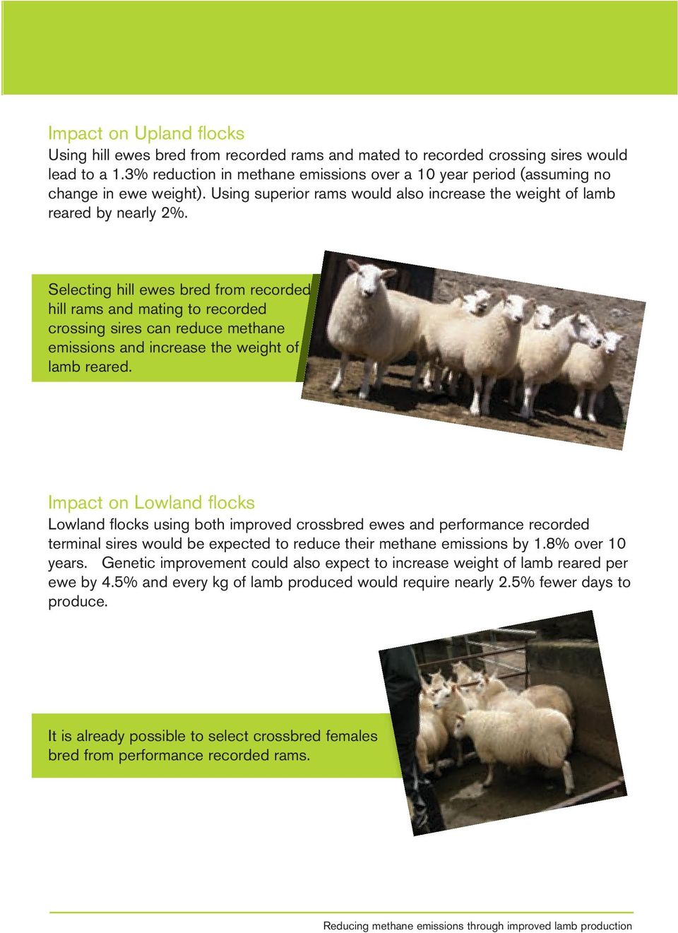 Selecting hill ewes bred from recorded hill rams and mating to recorded crossing sires can reduce methane emissions and increase the weight of lamb reared.