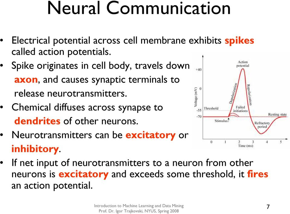 Chemical diffuses across synapse to dendrites of other neurons. Neurotransmitters can be excitatory or inhibitory.