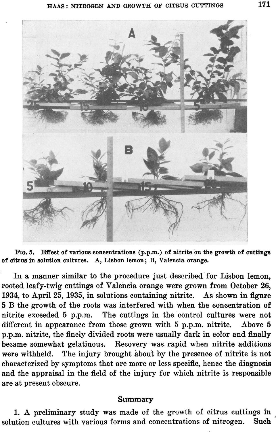 In a manner similar to the procedure just described for Lisbon lemon, rooted leafy-twig cuttings of Valeneia orange were grown from October 26, 1934, to April 25, 1935, in solutions containing