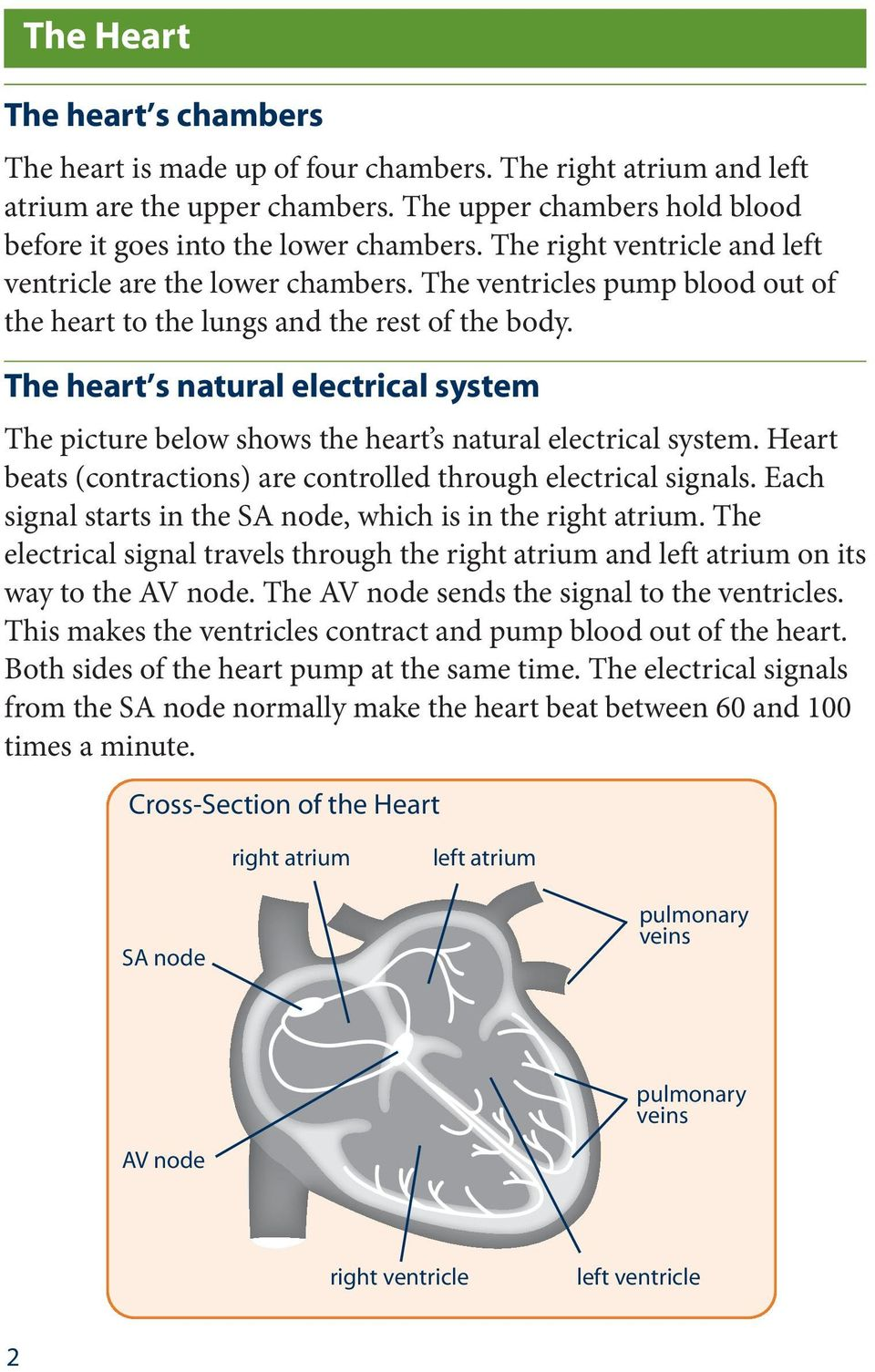 The heart s natural electrical system The picture below shows the heart s natural electrical system. Heart beats (contractions) are controlled through electrical signals.