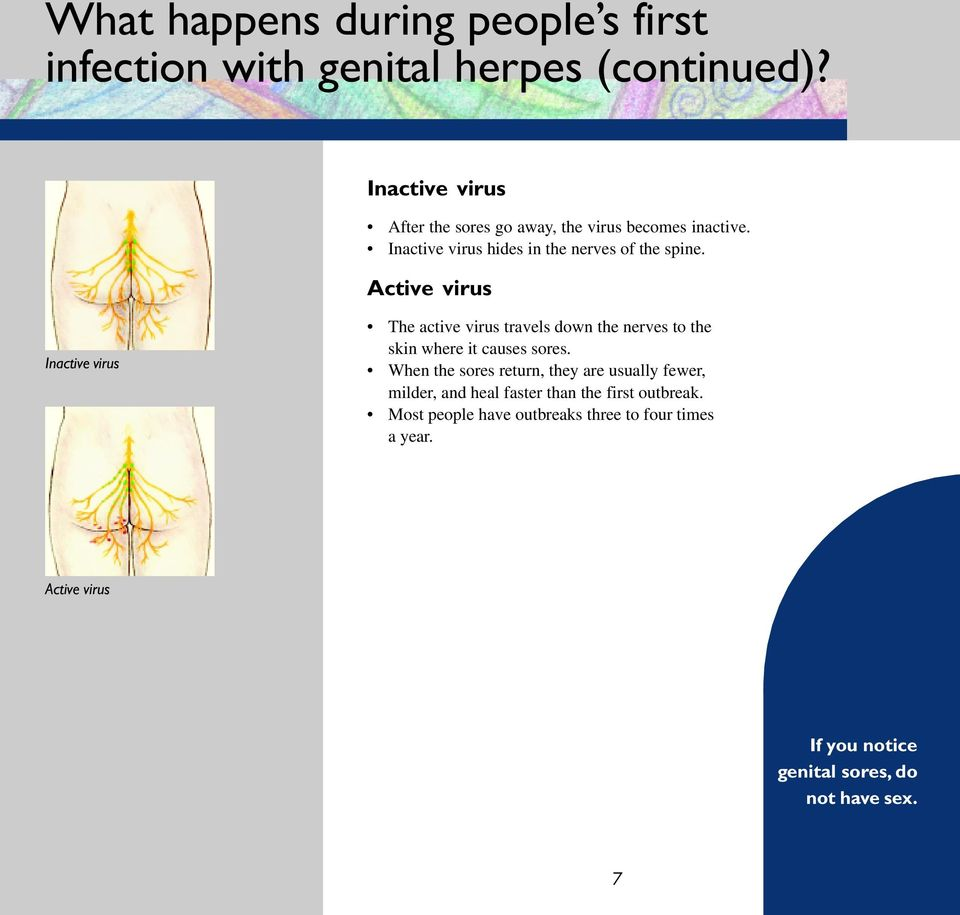 Active virus Inactive virus The active virus travels down the nerves to the skin where it causes sores.