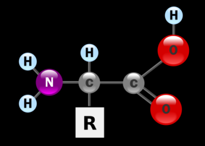 3. The diagram to the right represents which of the following biomolecules? 4. The diagram to the right represents which of the following biomolecules? Nitrogen (N) is used and reused by various organisms and processes as it cycles through the environment.