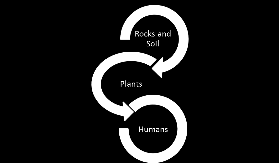 9. Have students create a model that shows the flow of energy from soil to plant to human. An example below. 10. Explain how this diagram will represent the flow of energy.