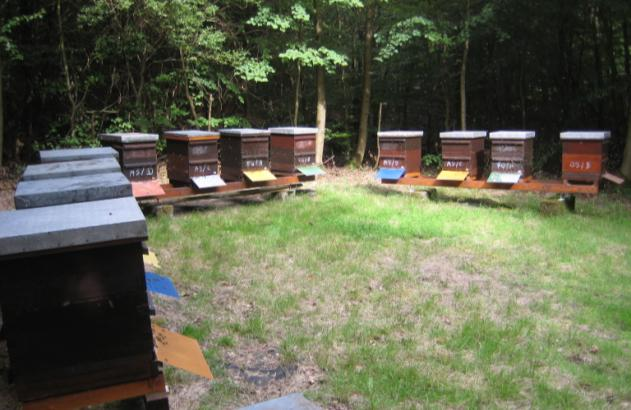 Apiary management Location Testing of colony performance should preferably be implemented under representative local conditions.