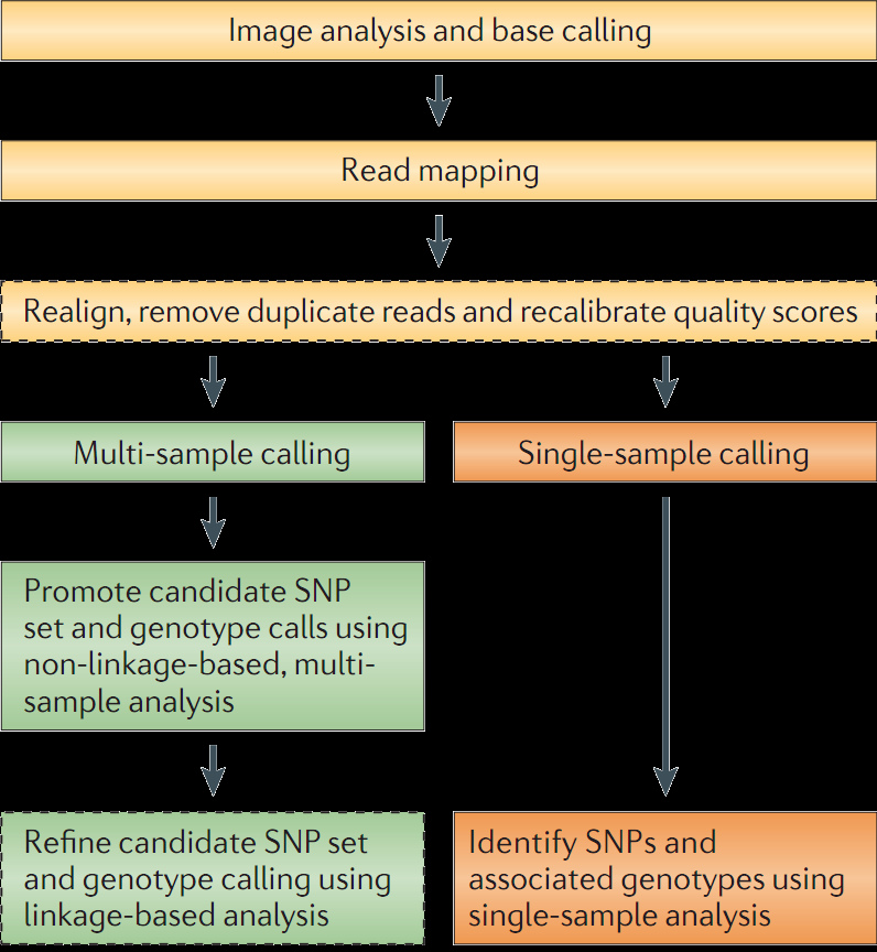 Modified from Nielsen et al June 2011 SNP and genotype calling workflow