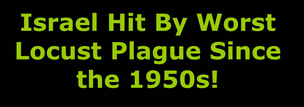 Plague Since the 1950s!