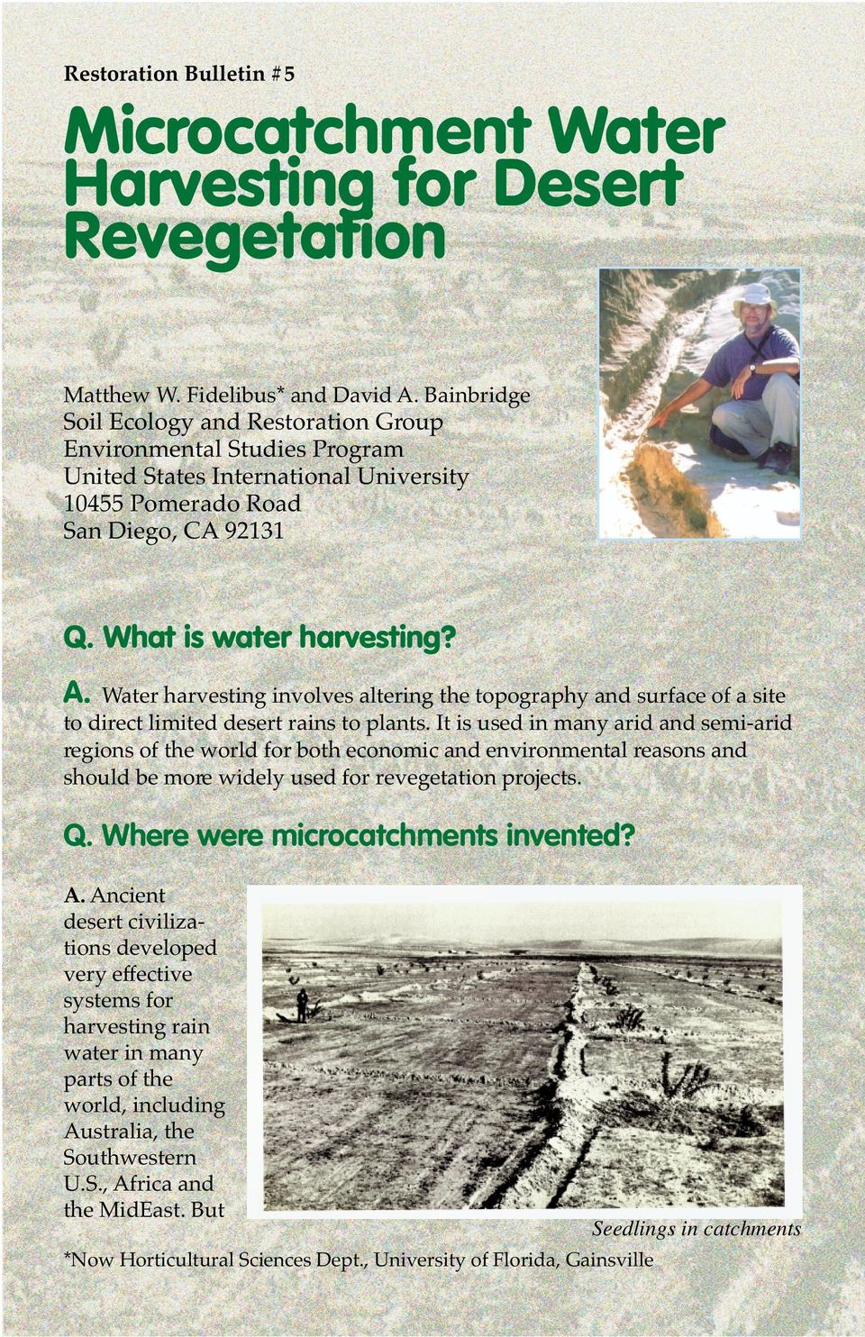 Water harvesting involves altering the topography and surface of a site to direct limited desert rains to plants.