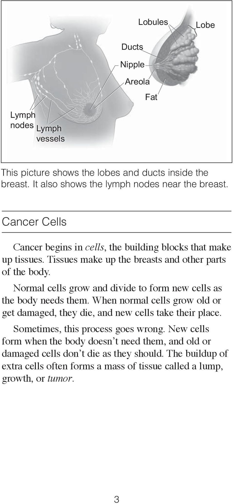 Normal cells grow and divide to form new cells as the body needs them. When normal cells grow old or get damaged, they die, and new cells take their place.