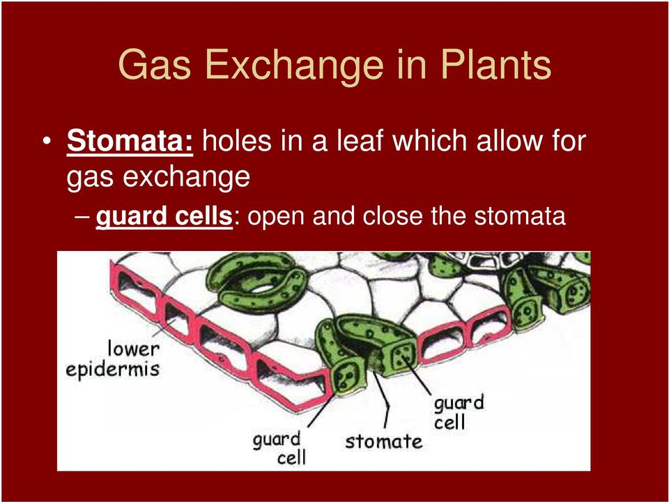 which allow for gas exchange