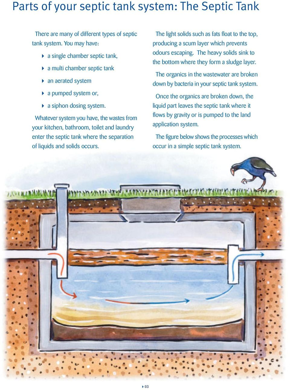 Whatever system you have, the wastes from your kitchen, bathroom, toilet and laundry enter the septic tank where the separation of liquids and solids occurs.
