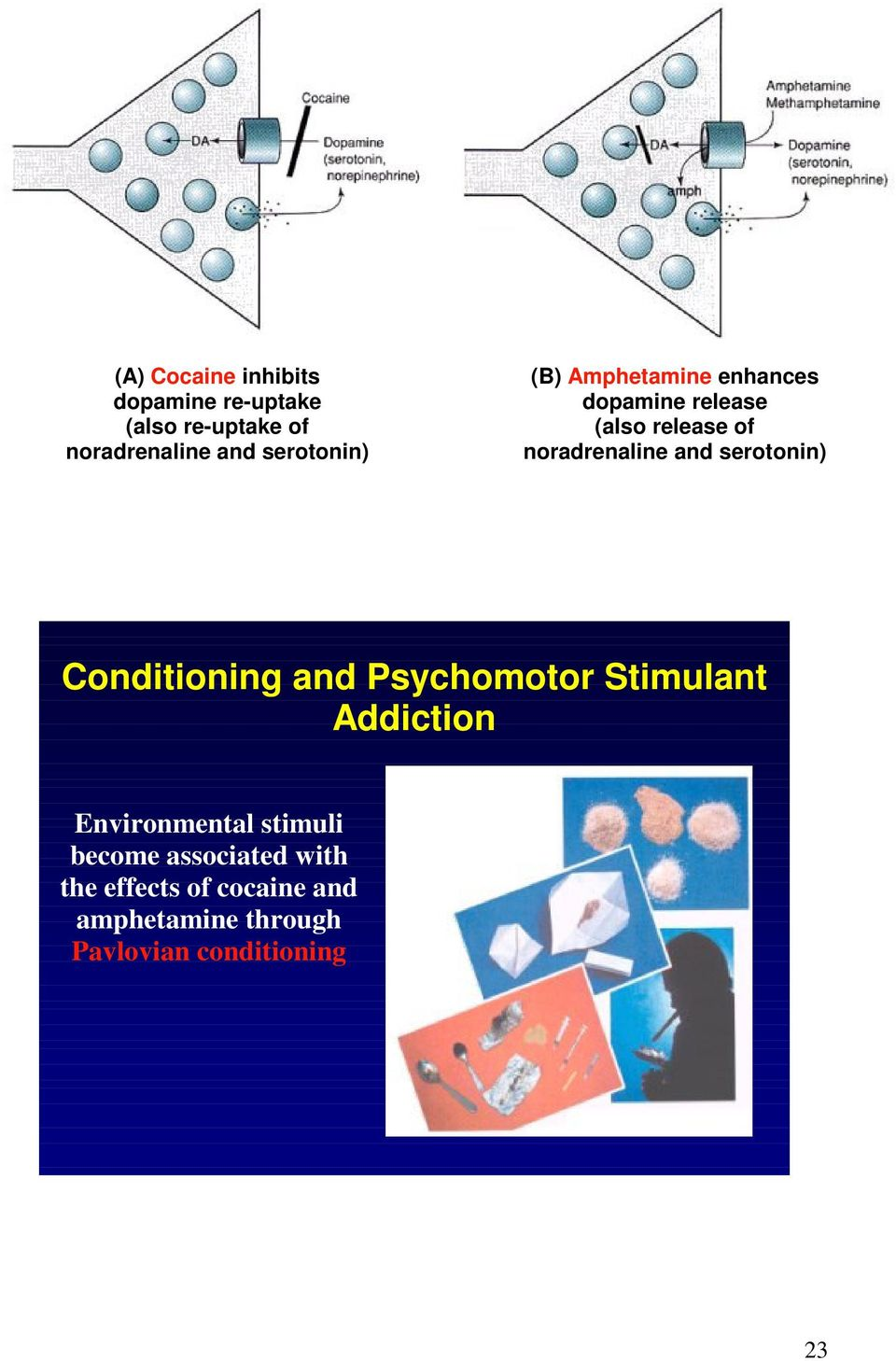 and serotonin) Conditioning and Psychomotor Stimulant Addiction Environmental stimuli