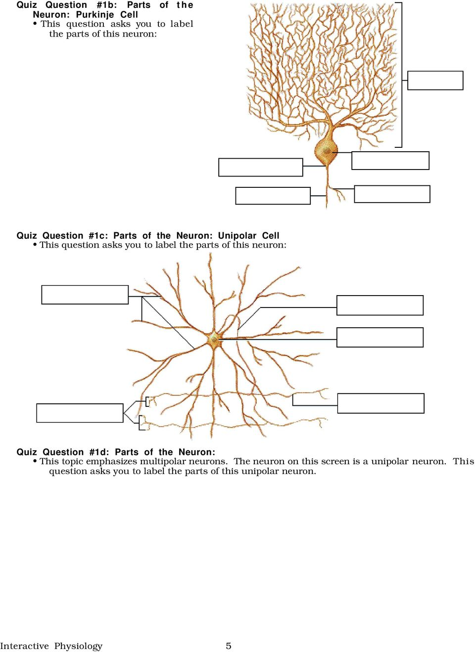 neuron: Quiz Question #1d: Parts of the Neuron: This topic emphasizes multipolar neurons.