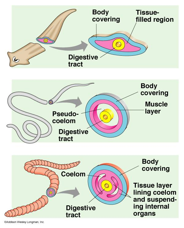 reproductive systems.