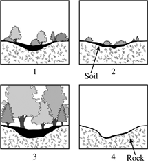38 The diagrams above show an ecosystem during different stages of ecological succession. In which order will these stages occur, from earliest to latest?