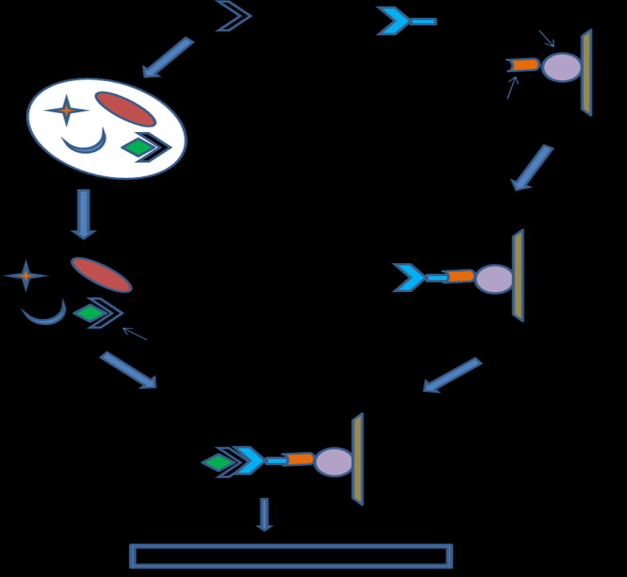 Important steps involved in Co-immunoprecipitation technique (Fig. 2.) 1.
