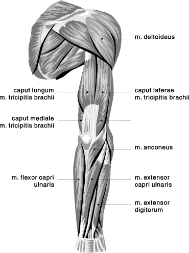 Anatomy: Upper