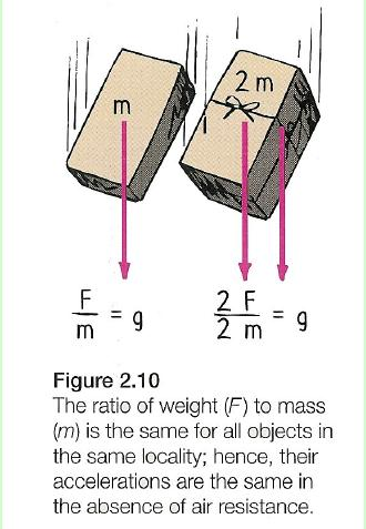 Acceleration Newton s Second Law can be expressed mathematically: The relationship of acceleration (a) to mass (m) and force (F) can be expressed mathematically with the following equation: or Mass