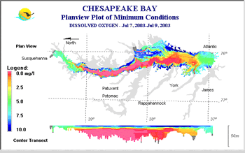 The Chesapeake s dead zone stretches for hundreds of square miles in the summer. Dissolved oxygen (DO) is the oxygen in the water that is available for organisms to use.
