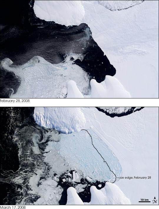 Warming of poles and loss of sea ice Collapse of Wilkins Ice