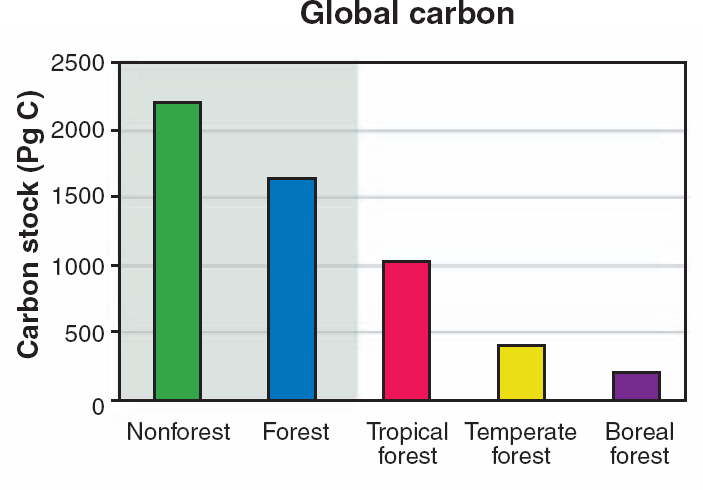 Forest carbon globally 45% of terrestrial carbon is stored in earth s forests Carbon stock by biome % terrestrial C Tropical ~25% Temperate ~10% Boreal ~5%