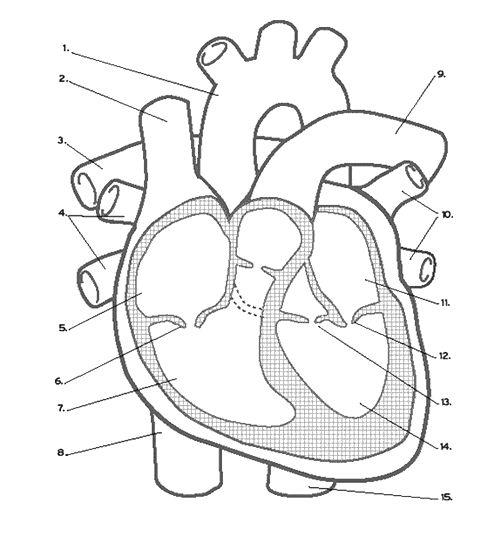 ex le assignment brief pdf EKG Placement Diagram name structures 1 15 on the diagram and explain their