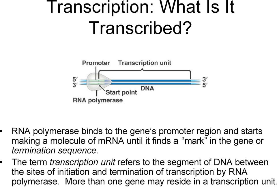 it finds a mark in the gene or termination sequence.