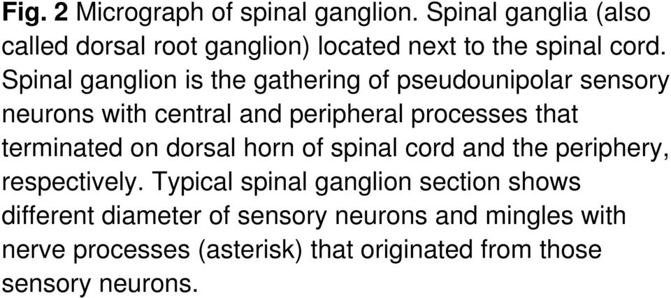 Spinal ganglion is the gathering of pseudounipolar sensory neurons with central and peripheral processes that
