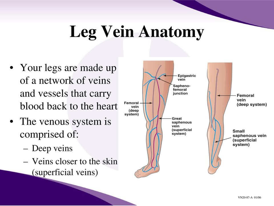 back to the heart The venous system is comprised
