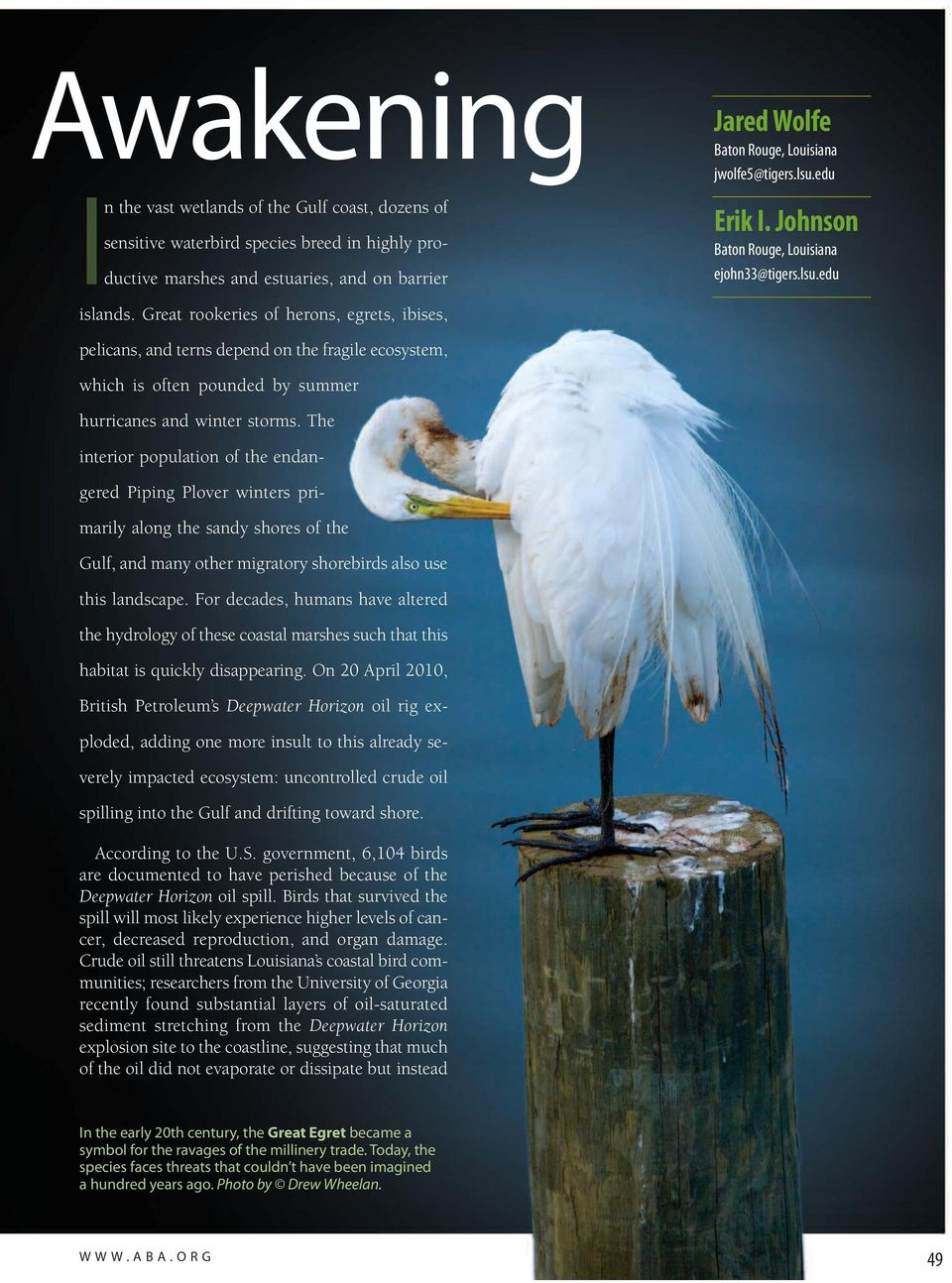 Great rookeries of herons, egrets, ibises, pelicans, and terns depend on the fragile ecosystem, which is often pounded by summer hurricanes and winter storms.