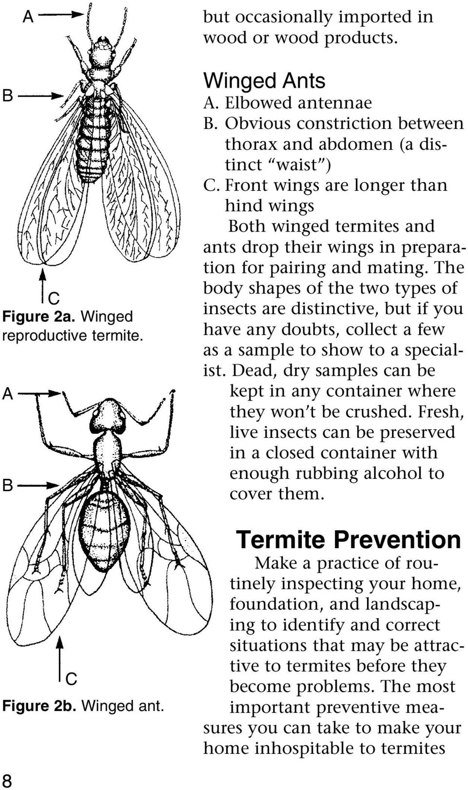The body shapes of the two types of insects are distinctive, but if you have any doubts, collect a few as a sample to show to a specialist.