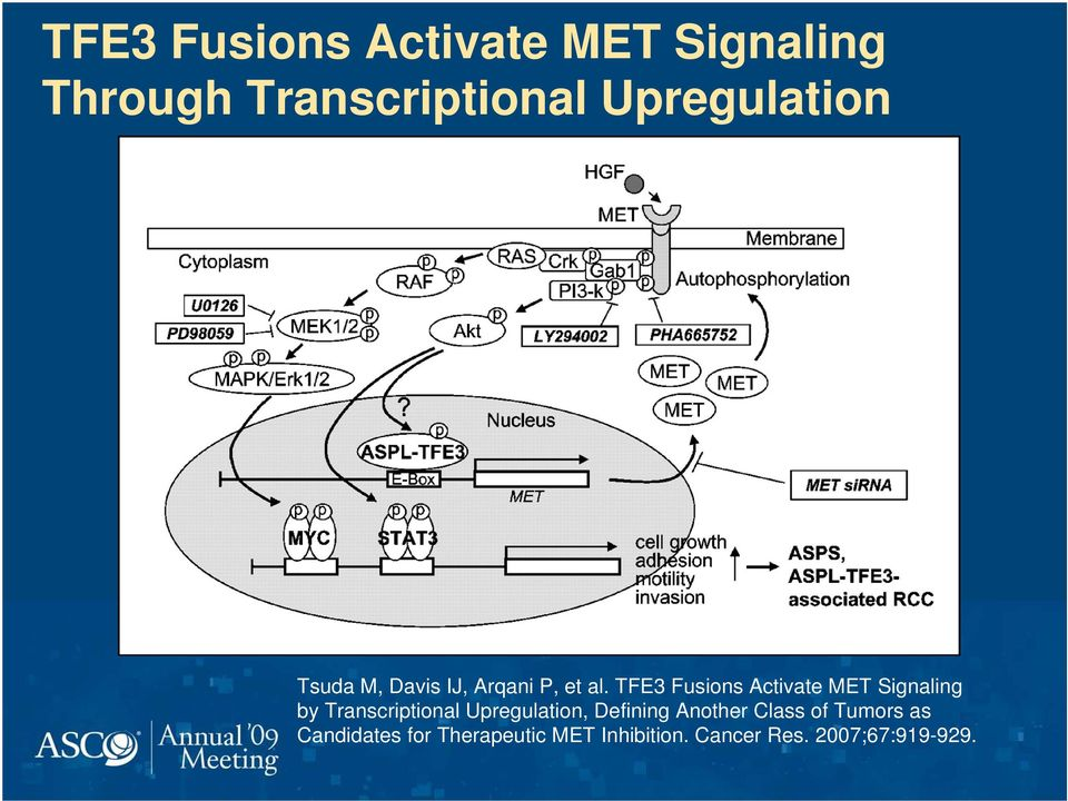 TFE3 Fusions Activate MET Signaling by Transcriptional Upregulation,