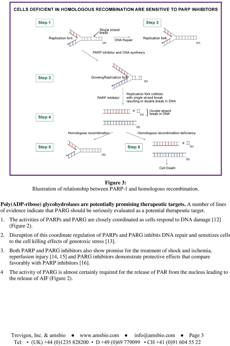 The activities of PARPs and PARG are closely coordinated as cells respond to DNA damage [12] (Figure 2)