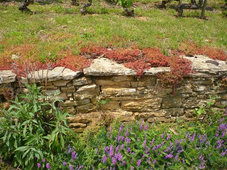 10 3. Construction and conservation of stone walls Small stone walls have traditionally been used to mark the limits of vineyards or to support and consolidate vine terraces in mountain and steep